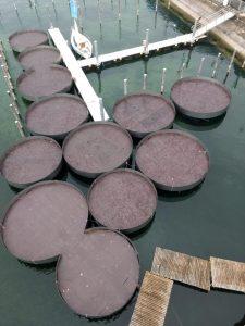Viele runde Schwimmplattformen an einem Steg